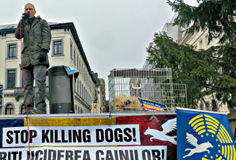STOP KILLING DOGS concert in Brussels