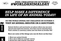 World Animal Day CHALLENGE!