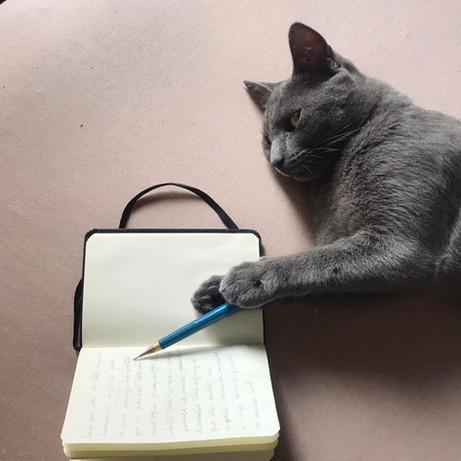 gato2.jpeg