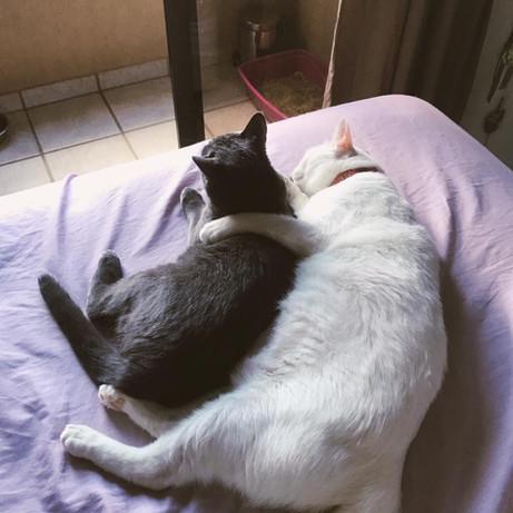 gato4.jpeg