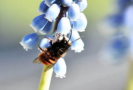 bee wasp mason.jpg