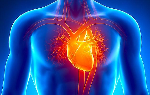 enfermedades cardíacas en Google Salud