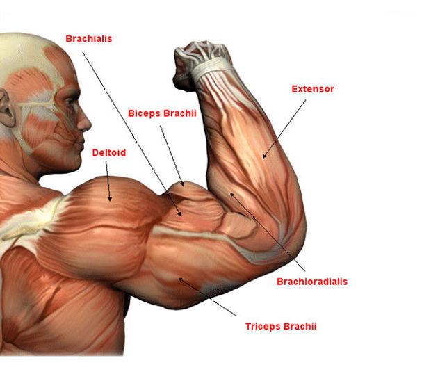 Ejercicios para Biceps y Triceps, en Google Salud News