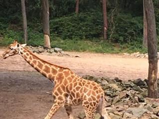Samen naar het Burgers Zoo