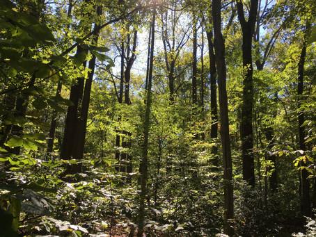 Walks in the Woods (I)