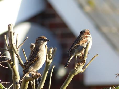 Bring Birds To Your Garden This Winter