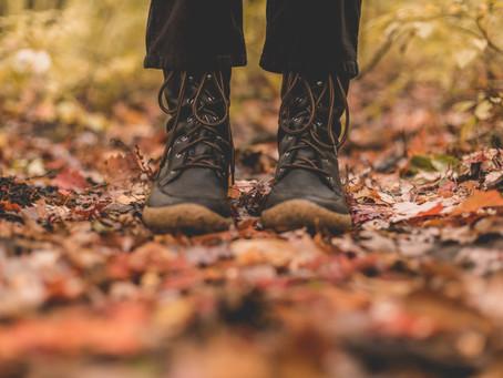 Autumn Gardening In Your Rental Property