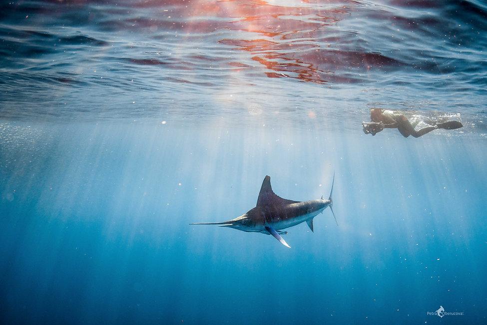 Marlin Expedition
