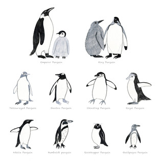 ペンギンいろいろ