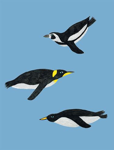 Acrobat Penguins