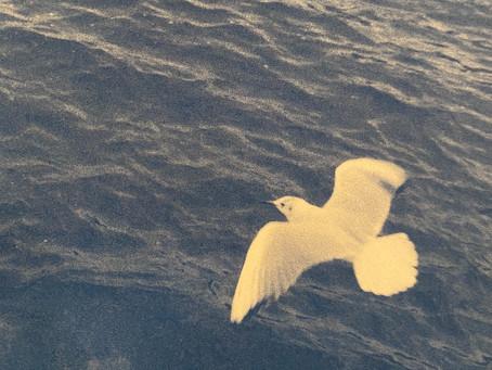 最新曲White birdがSpotify公式プレイリスト入り