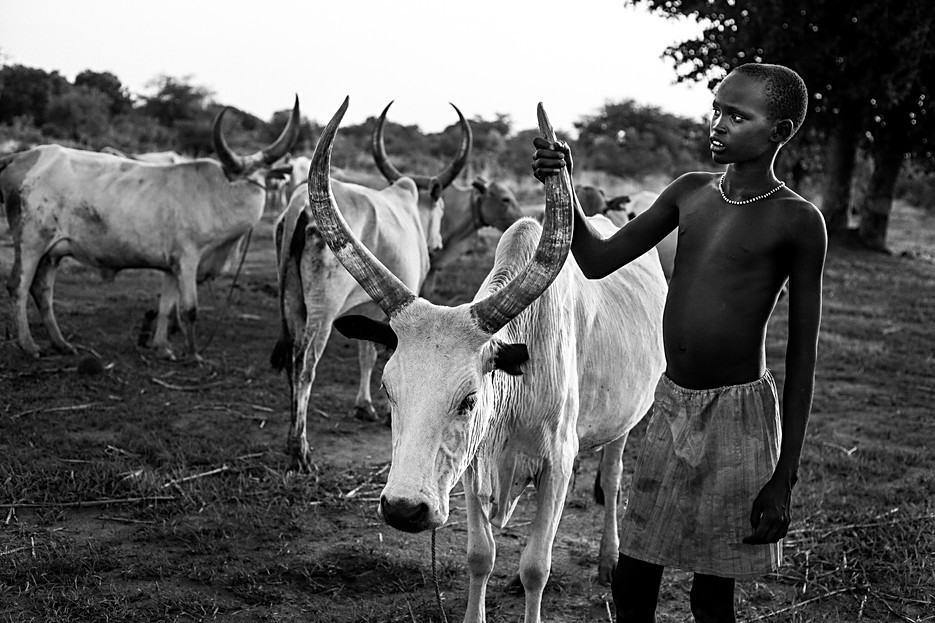 Cattle are the pillar of Dinka society. The whole life and culture is built around cattle. Cattle is needed to get married and cattle is only slaughtered to cure a sickness or for an important sacrifice. When a cow or bull dies from a disease, it's meat will still be eaten. The children and youngsters go around with the cattle looking for grazing land. Beautifull songs are composed, the boys sing for their bull and the girls admire the boys with beautiful cattle.