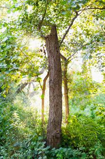 mark_cator_dreaming_tree_garden.jpg