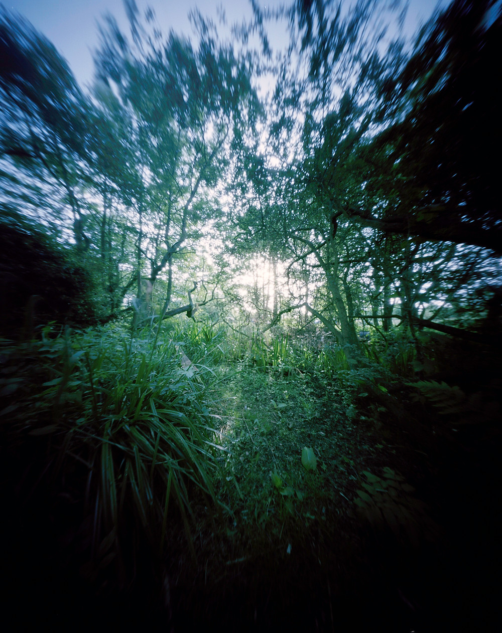 garden, pinhole camera, Mark Cator