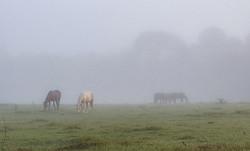Fog Horses 11.07.2017