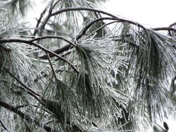 Ice Structure NWS JAX Ice Storm 01.03.2018