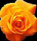 Rose Orange.png