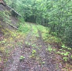 Old Meadow Ck Rd 1.jpg