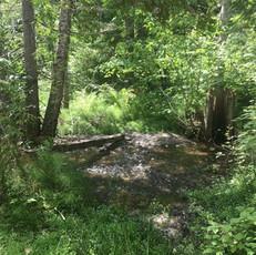 Creek 3.jpeg