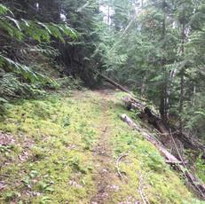 old meadow ck rd 6.jpg