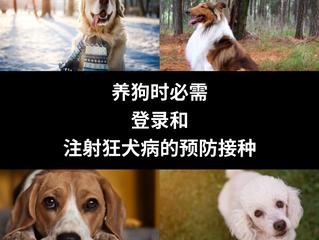 养狗时必需登录和注射狂犬病的预防接种