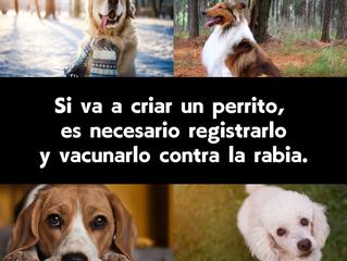Si va a criar un perrito, es necesario registrarlo y vacunarlo contra la rabia