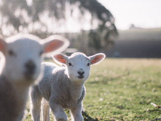 Being Full of the Lamb (part 1)