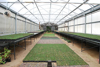 Our warm propagation house for producing rooted cuttings and seedlings