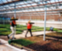 Wholesale Plant Nursery Horticultural Job Postings