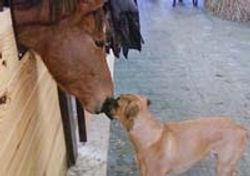 oscar and horse.jpg