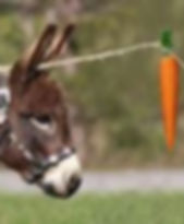 donkey with carrot.jpg