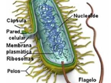 Células procariontes y otras microparticulas patogenas.