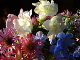 asters and snapdragons