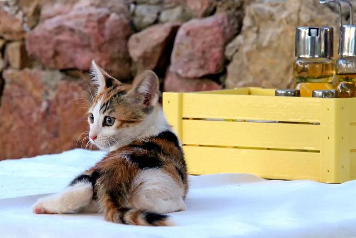 Kitten & Condiments.jpg