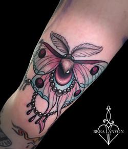INDIA moth