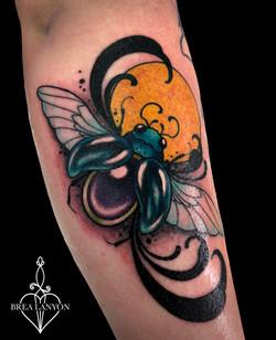 dion beetle 2