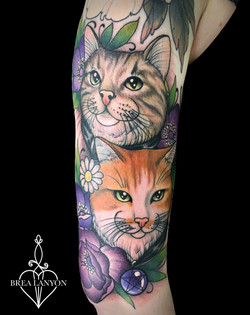 sharna cats