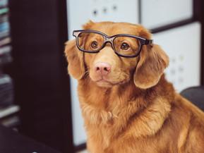 Get Unstuck by Recruiting your Little Professor