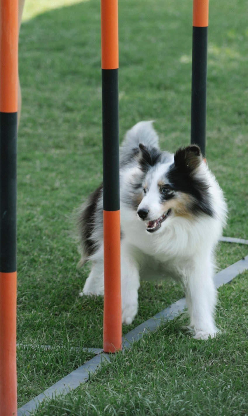 Escaperoom Doggyland zomerspelen