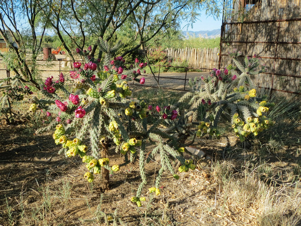 wil-howe-ranch-sw-outpost-cochise-az-094