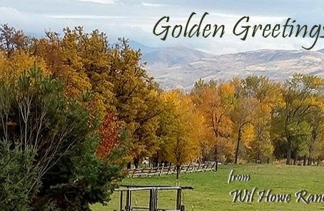 Golden Greetings from Wil Howe Ranch!