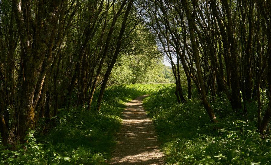 Lady Louisa's Walk