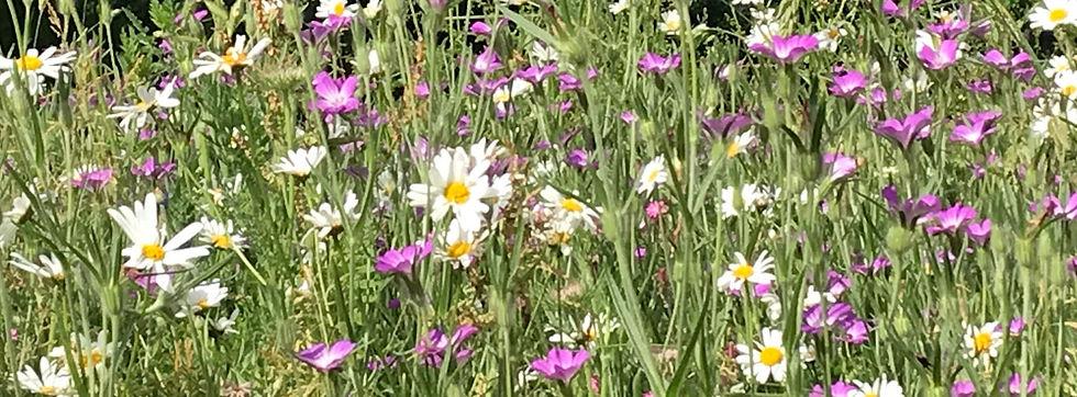 wildflowers_edited.jpg