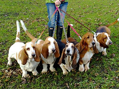 Dog Walking in Blandford Forum, Blandford Dog Walker,Blandford Pet Sitting,Blandford dog Kennels, Blandford House Sitting,Blandford Doggie Day Care,Blandford Dog weddings, Dorset Dog Walking, Blandford Pet care, Blandford Dog boarding