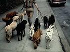 Dog Walking in Blandford Forum, Blandford Dog Walker,Blandford Pet Sitting,Blandford dog Kennels, Blandford House Sitting,Blandford Doggie Day Care,Blandford Dog weddings, Dorset Dog Walking, Blandford Pet care, Blandford Dog boarding