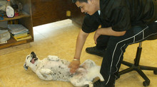 Having Fun with my Groomer, Zeth