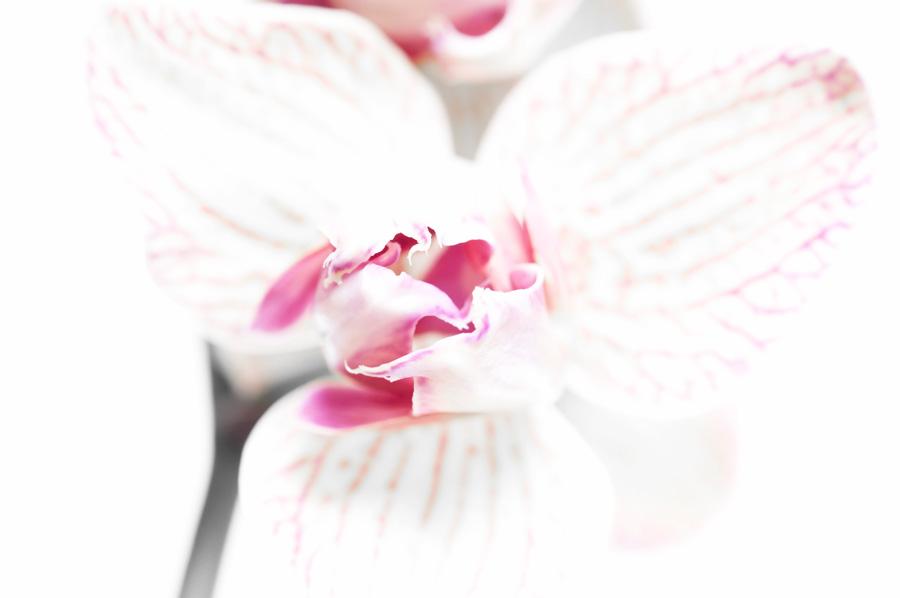 Blumen_2