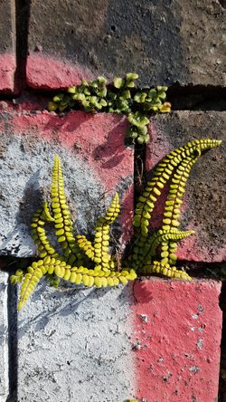 fern and brick.png