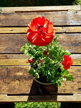 Garden table - top