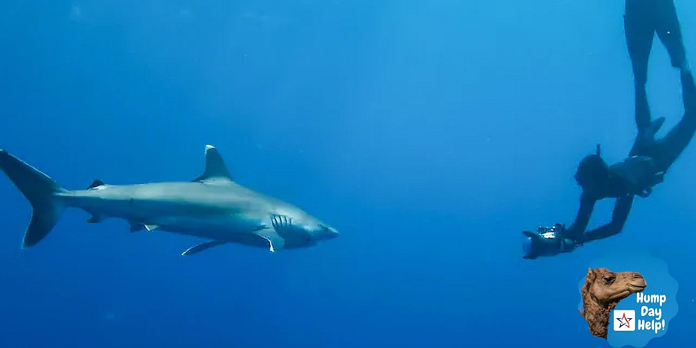 Hump Day Help: Meet a Real Life Shark Scientist